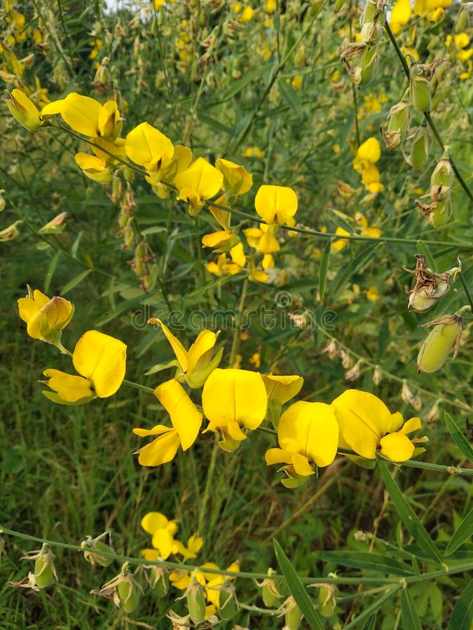 Bos bloemen stock afbeeldingen