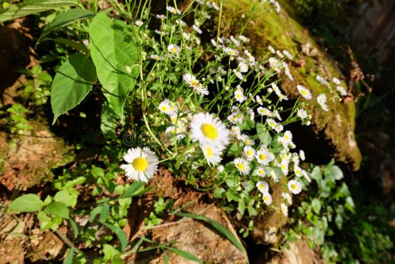 Bos bloemen stock foto