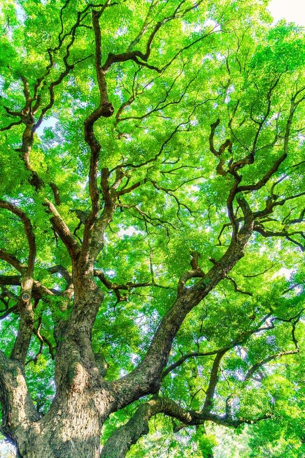 Bos bomen royalty-vrije stock afbeelding
