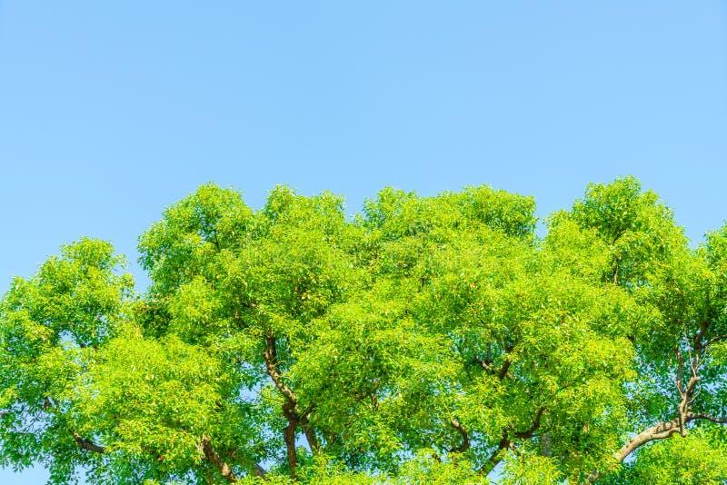 Bos bomen stock fotografie