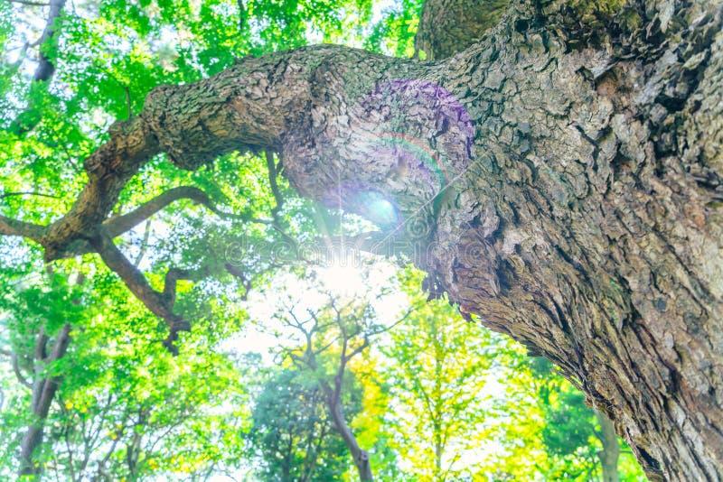 Bos bomen stock foto