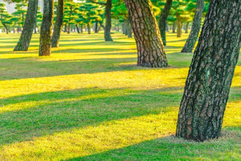 Bos bomen stock afbeeldingen