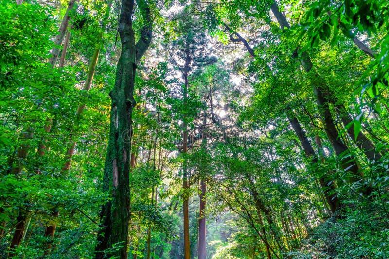 Bos bomen royalty-vrije stock afbeeldingen