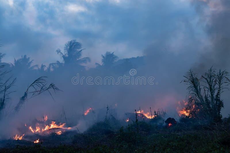 Bos brand bij nacht De struiken branden, is de lucht verontreinigd met rook Brand, close-up stock afbeelding