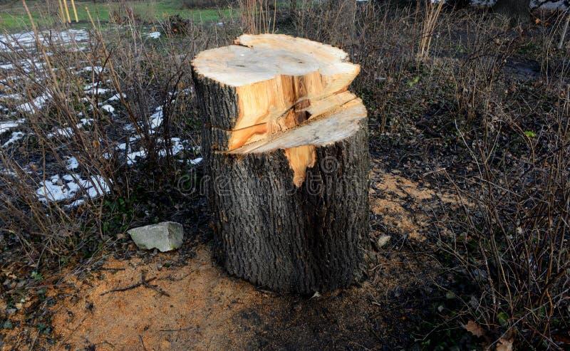 Bos in Bulgarije, de lentetijd wordt verminderd die royalty-vrije stock afbeeldingen