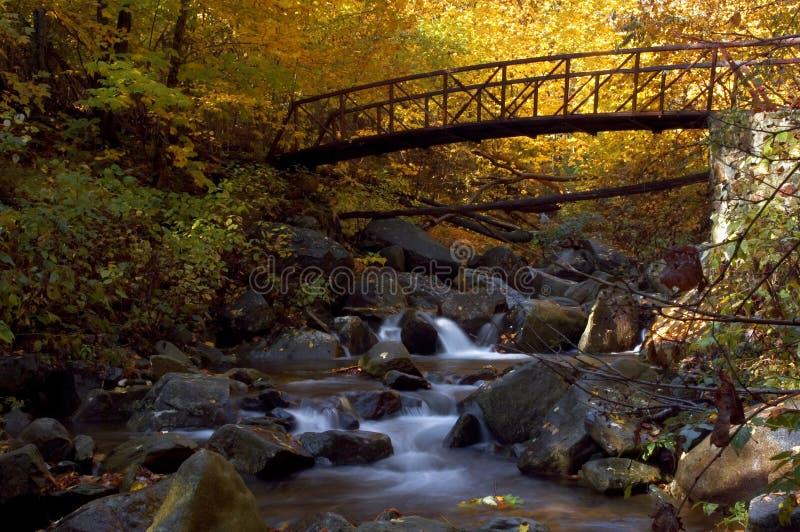 Bos Cascade stock fotografie