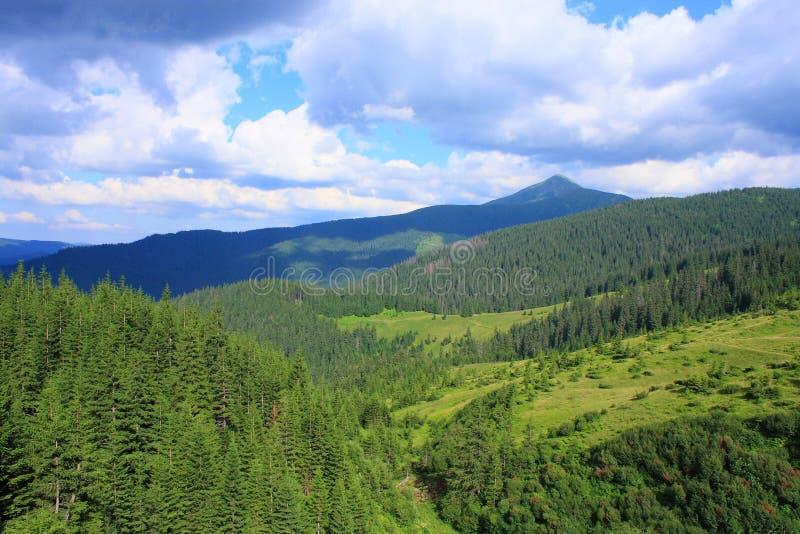 Bos in de bergen royalty-vrije stock foto's