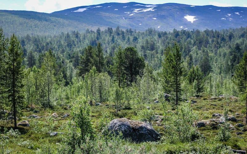 Bos in de bergen stock foto