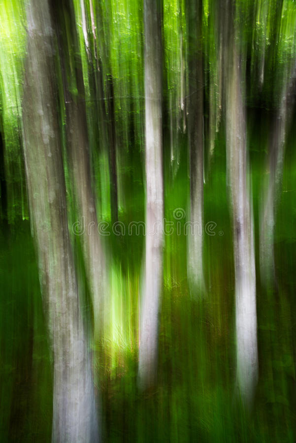 Bos in de bergen stock fotografie