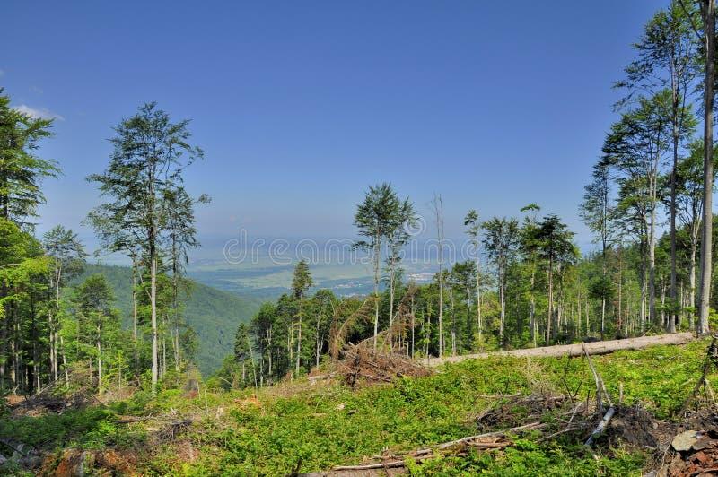 Bos in de bergen die van de Karpaten wordt verminderd stock afbeelding