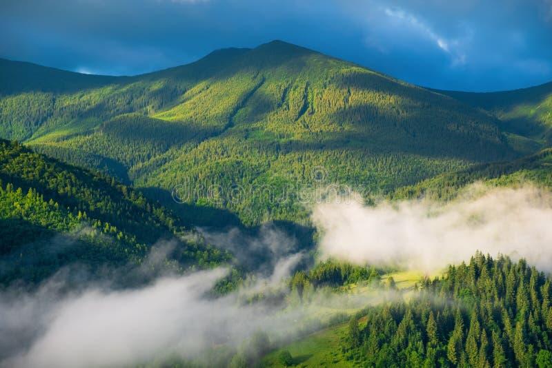 Bos in de bergen De zomerbos in bergen Natuurlijk de zomerlandschap Bos in Mist Landelijk landschap royalty-vrije stock foto
