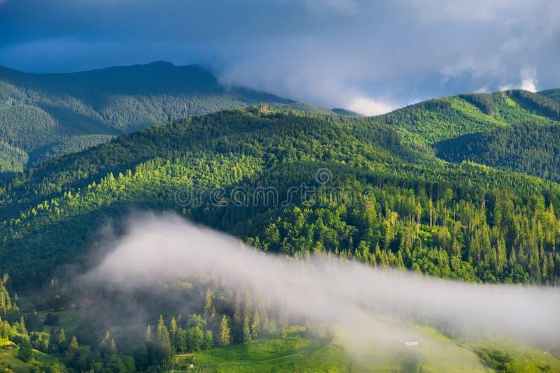 Bos in de bergen De zomerbos in bergen Natuurlijk de zomerlandschap Bos in Mist Landelijk landschap stock afbeelding