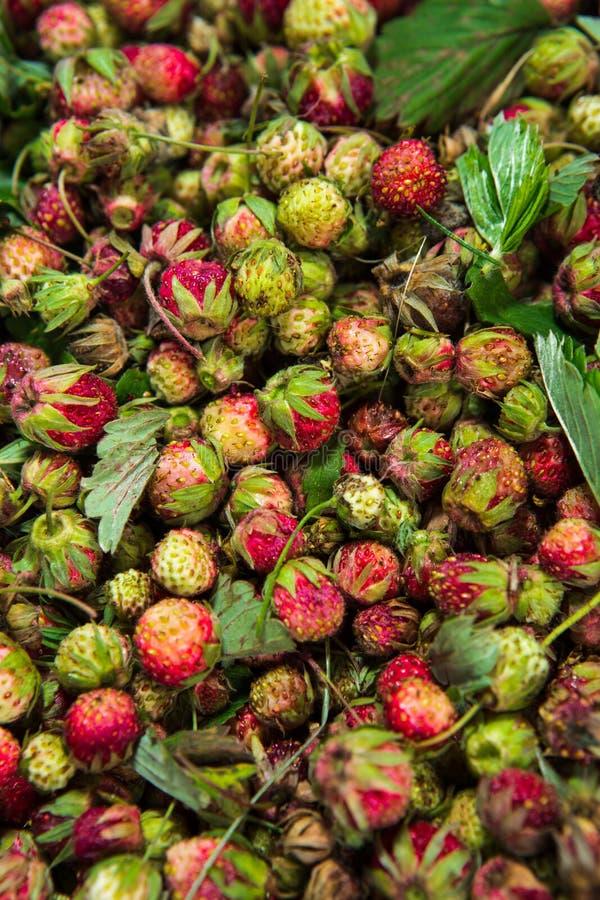 Bos de bessen van de zomer rode wilde zoete aardbeien macro als achtergrond stock afbeeldingen