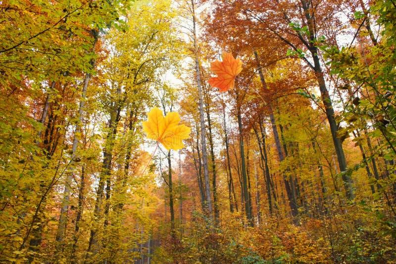 Download Bos in de herfst stock foto. Afbeelding bestaande uit bomen - 29505622