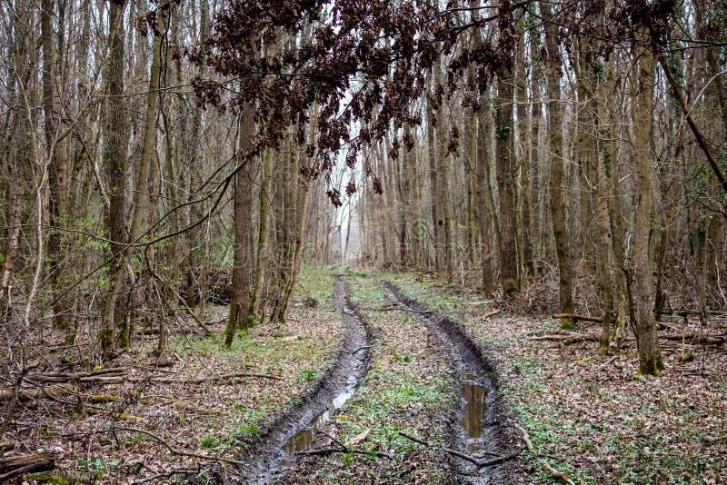 Bos in de herfst en de weg van het modderspoor daarin stock afbeeldingen
