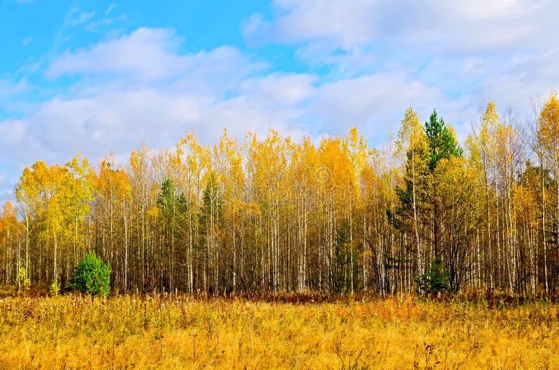 Bos de herfst gele en blauwe hemel royalty-vrije stock afbeelding