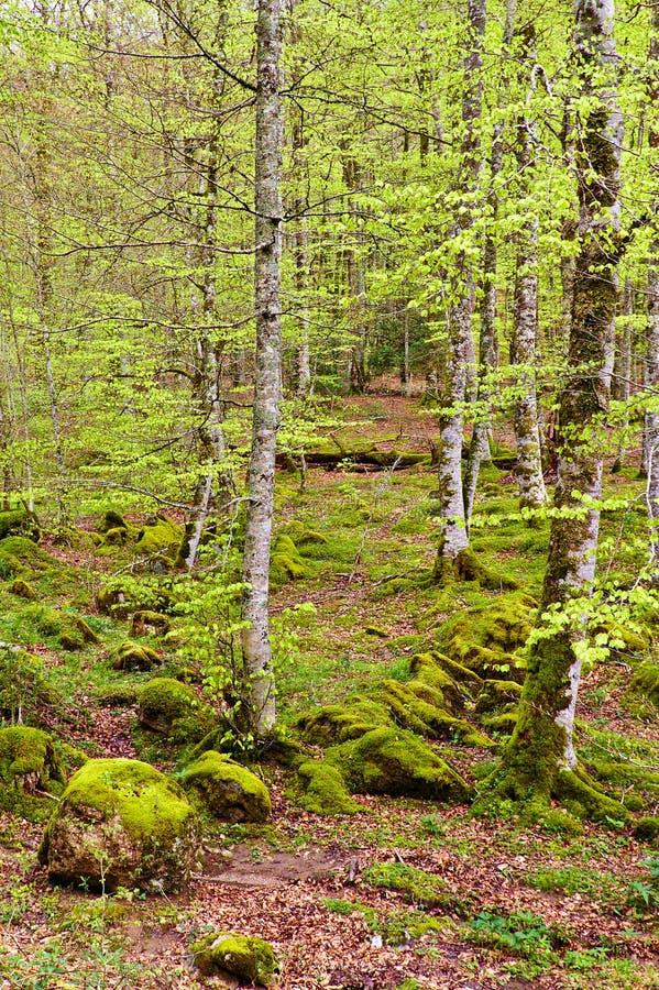Bos in de Irati-wildernis royalty-vrije stock foto's