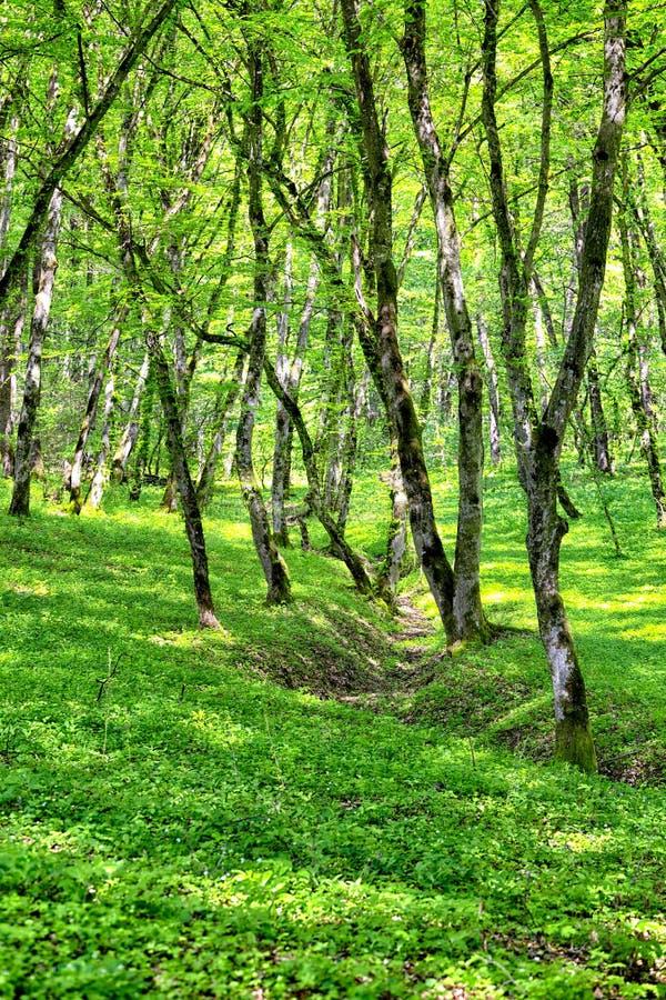 Bos in de lente stock fotografie