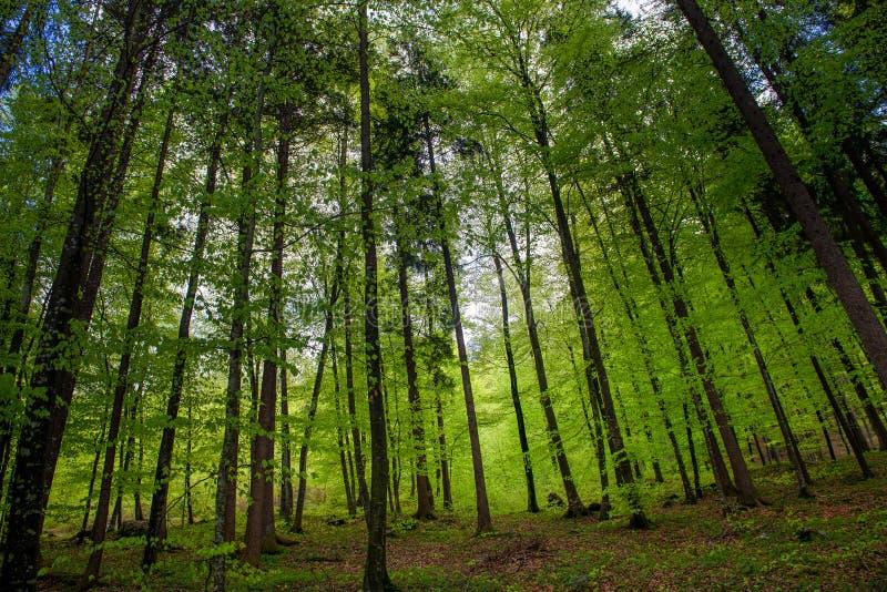 Bos in de lente stock foto