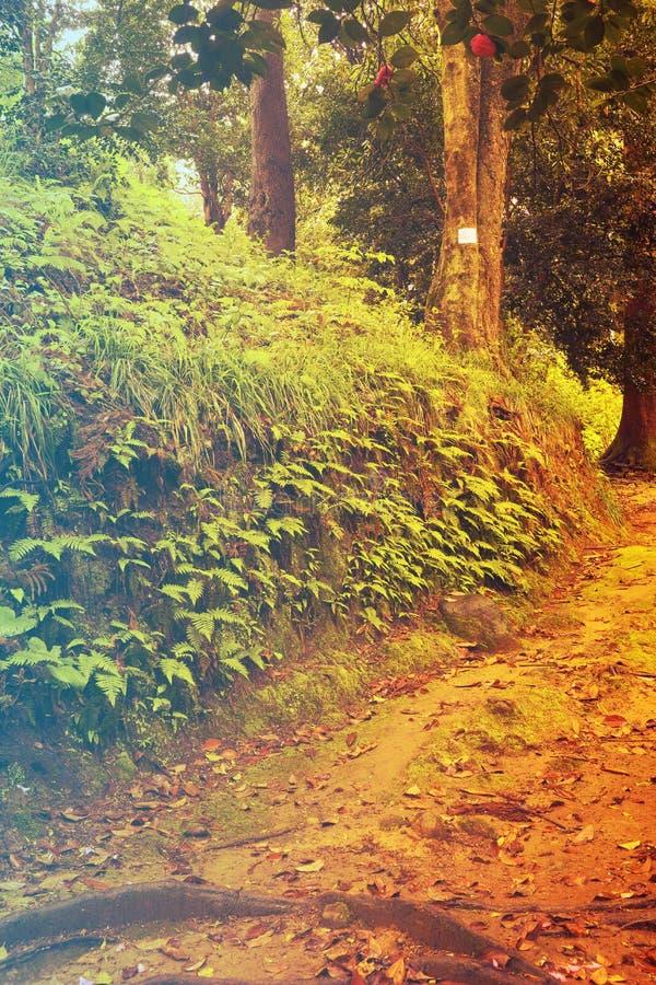 Bos in de lente Gefiltreerd beeld: warm dwars verwerkt uitstekend effect royalty-vrije stock afbeeldingen