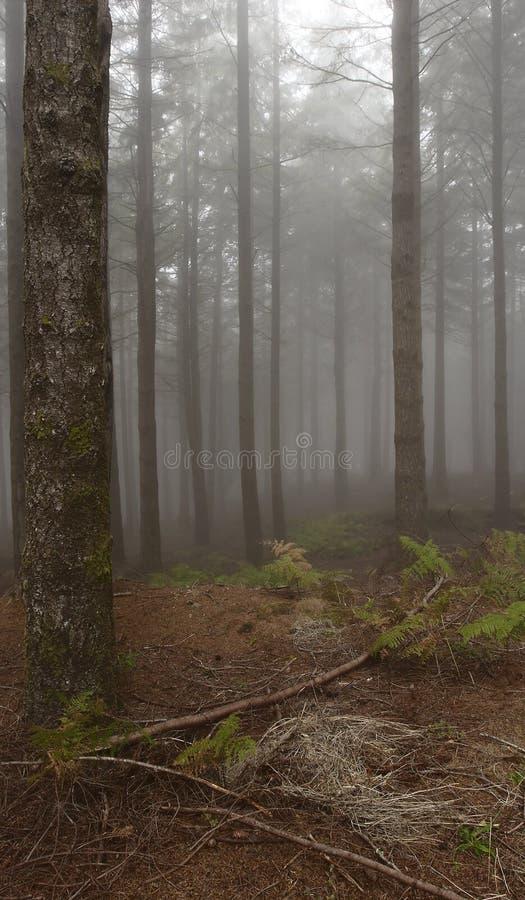 Bos in de mist royalty-vrije stock afbeelding