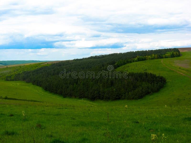Bos in de vorm van een hart, op de heuvels wordt geplant die stock fotografie