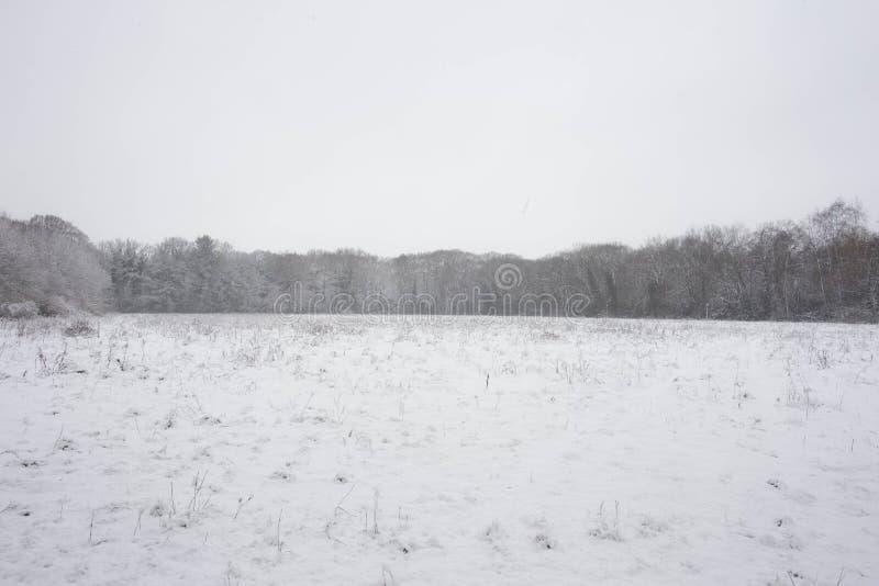 Bos in de winter stock afbeeldingen