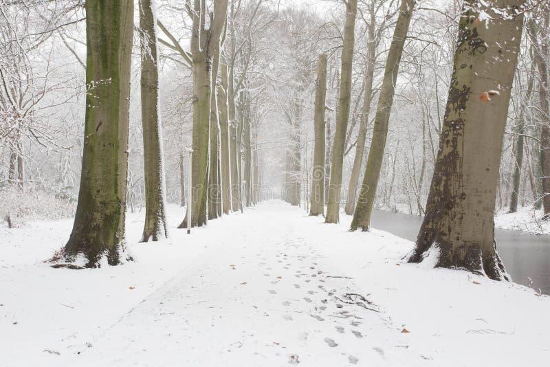 Bos in de winter met witte sneeuw en een bevroren weg stock foto's