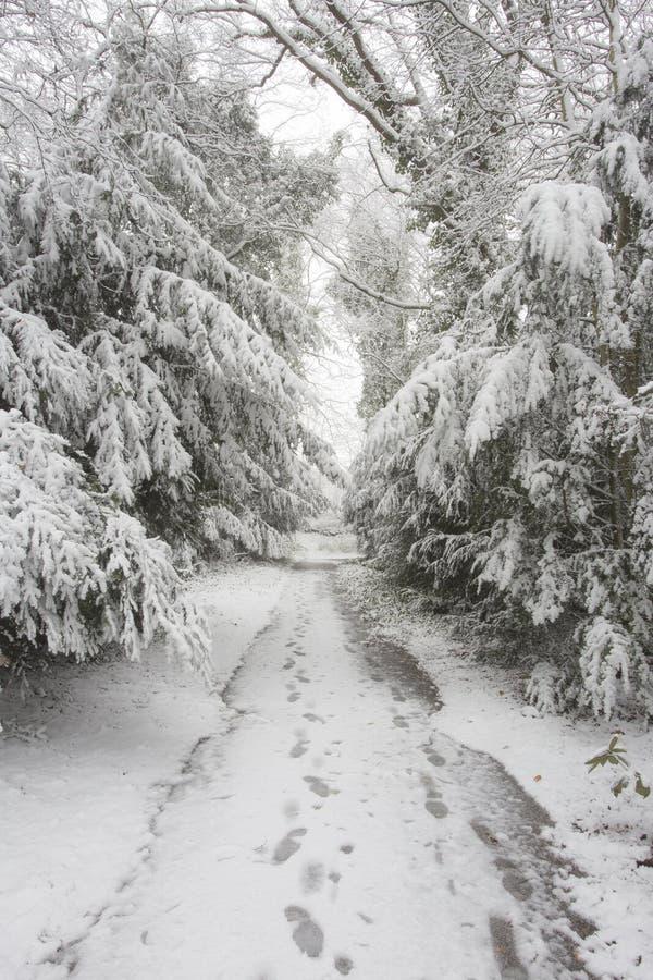 Bos in de winter met witte sneeuw en een bevroren weg met voetafdrukken stock fotografie