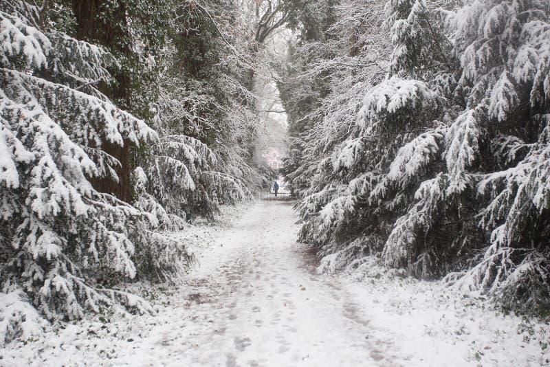 Bos in de winter met witte sneeuw en mensen die op de ijsweg lopen royalty-vrije stock foto's