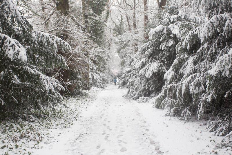 Bos in de winter met witte sneeuw en mensen die op de weg lopen stock foto