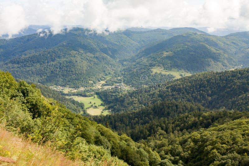 Bos dichtbij de Impuls d'Alsace royalty-vrije stock foto
