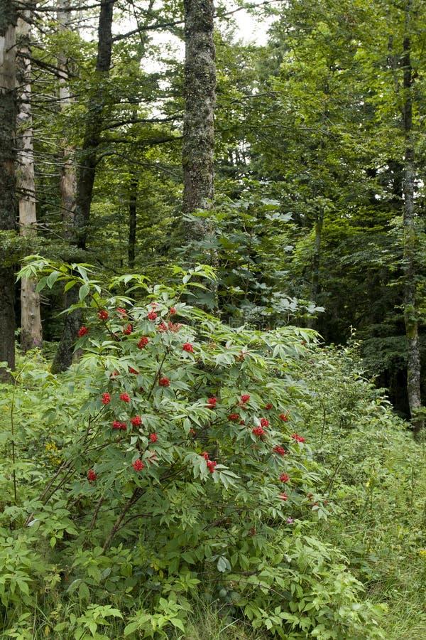 Bos dichtbij de Impuls d'Alsace royalty-vrije stock fotografie