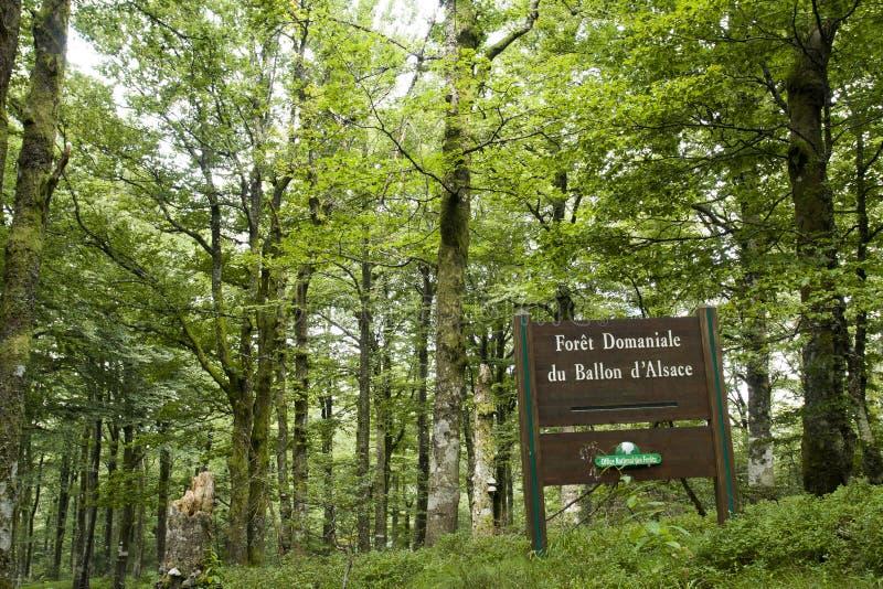 Bos dichtbij de Impuls d'Alsace stock foto's