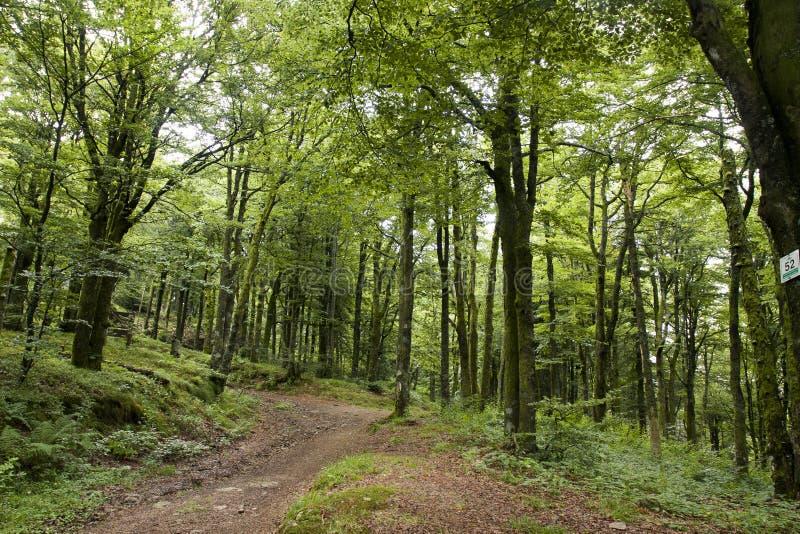Bos dichtbij de Impuls d'Alsace stock fotografie