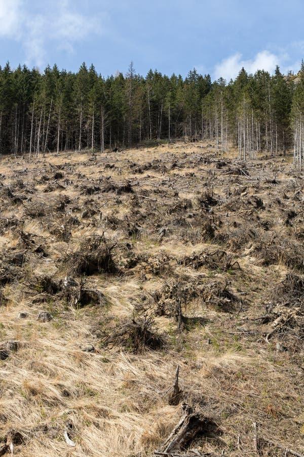 Bos die wordend een droog futloos gebied worden verminderd stock fotografie