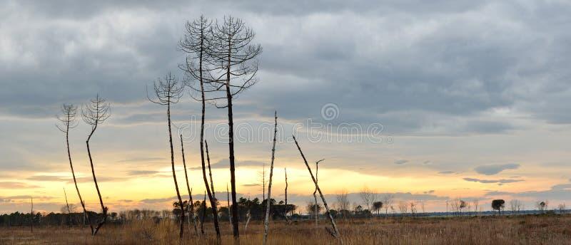 Bos door brand in het strand van dante, Italië wordt gebrand dat stock foto