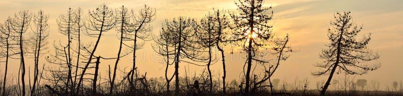 Bos door brand in het strand van dante, Italië wordt gebrand dat royalty-vrije stock foto