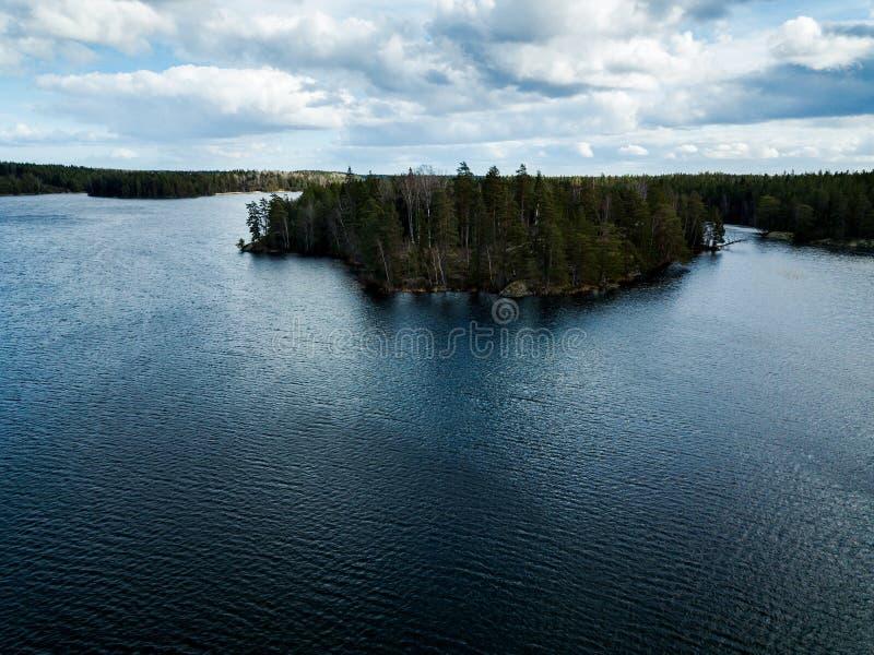 Bos door meer stock fotografie