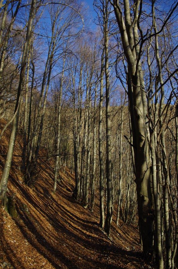 Bos in een koude ochtend stock foto