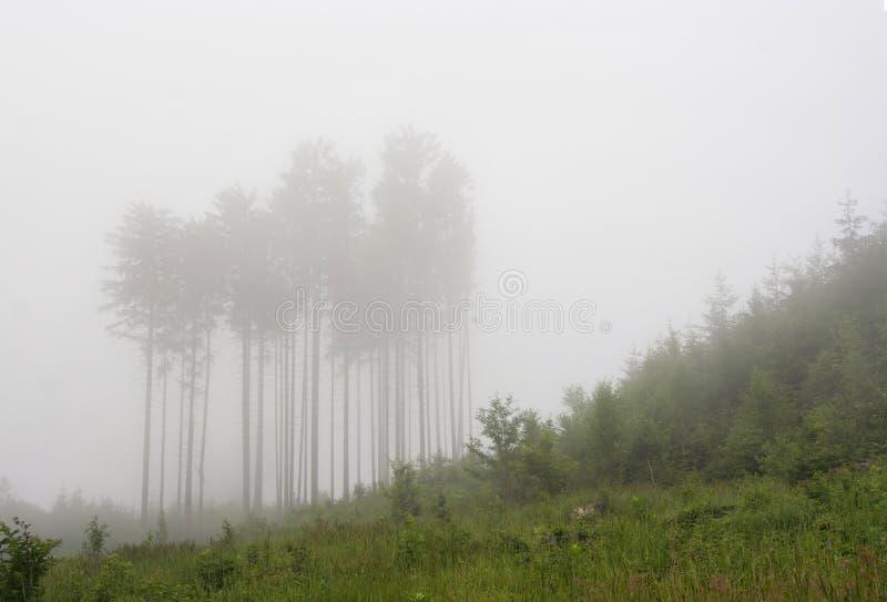 Bos in een mist royalty-vrije stock foto