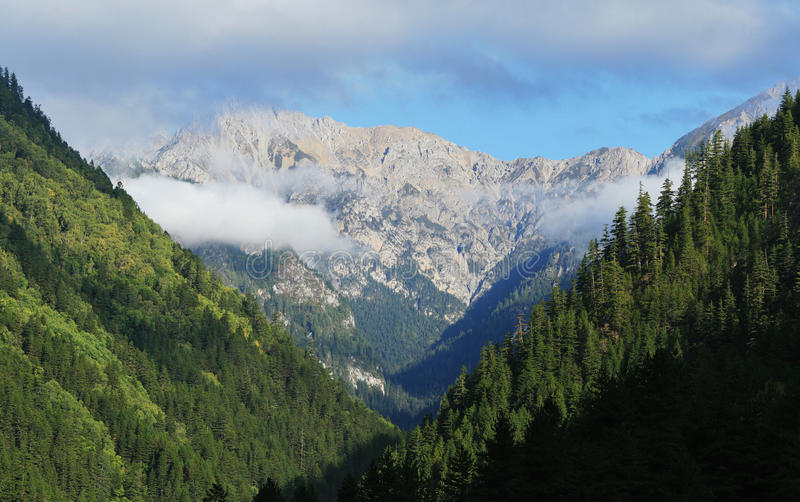 Bos en berg royalty-vrije stock afbeelding