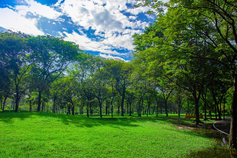Bos en blauwe hemel Aard groen hout en gras in regenachtig seizoen royalty-vrije stock foto's