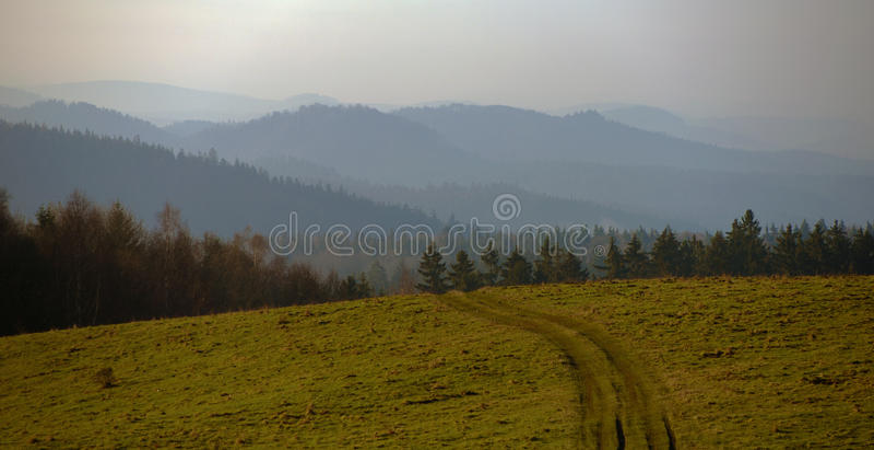 Bos en bomen in nationaal park stock foto's