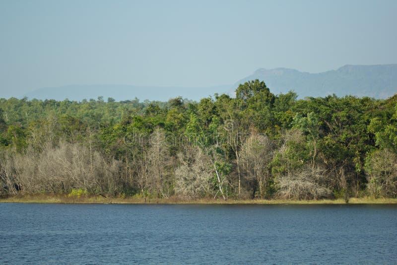 Bos en de rivier royalty-vrije stock fotografie