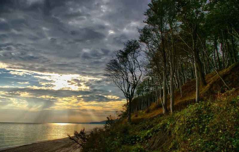 Bos en kust stock foto's