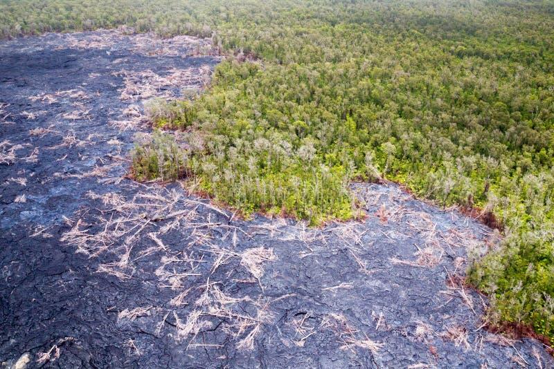 Bos en lavastromen stock foto's