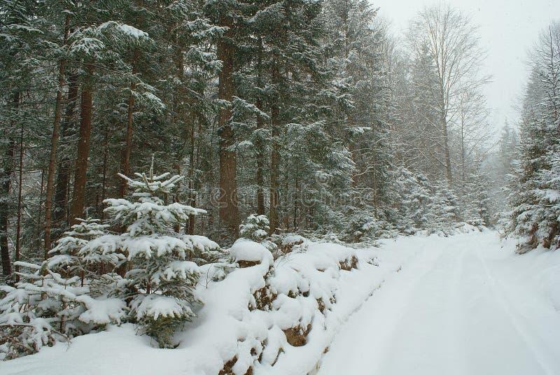 Bos en lege weg met diepe behandelde sneeuw stock foto's