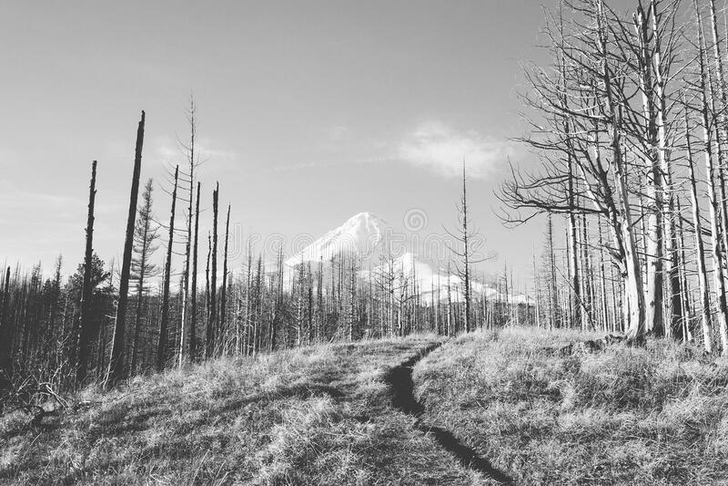 Bos en sneeuw behandelde berg royalty-vrije stock afbeeldingen