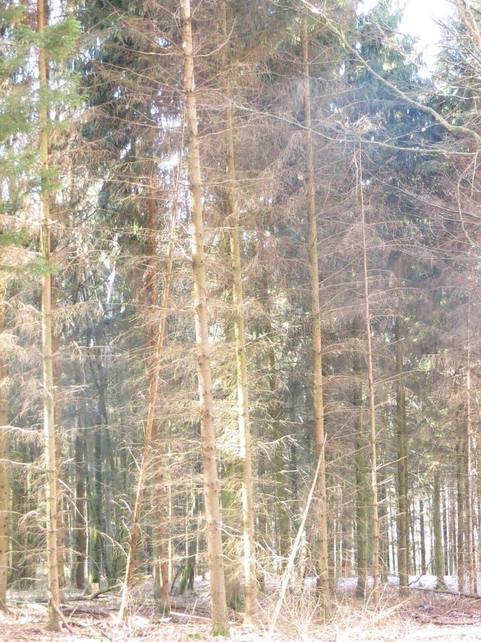 Bos en zonnestralen stock foto's